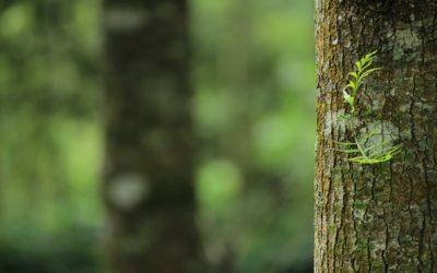 Miłość do wewnętrznego dziecka rozwija liście na drzewie